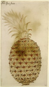 The Pyne frute, 1585-93